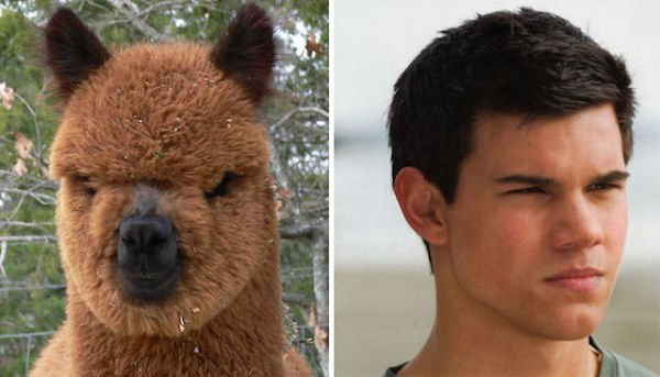 14 Lookalikes That Are Hilariously Similar To Each Other